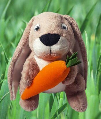 Królik z pomarańczową marchewką